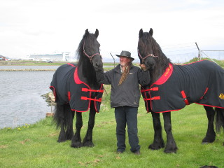 Tom and Jerry friesian horses